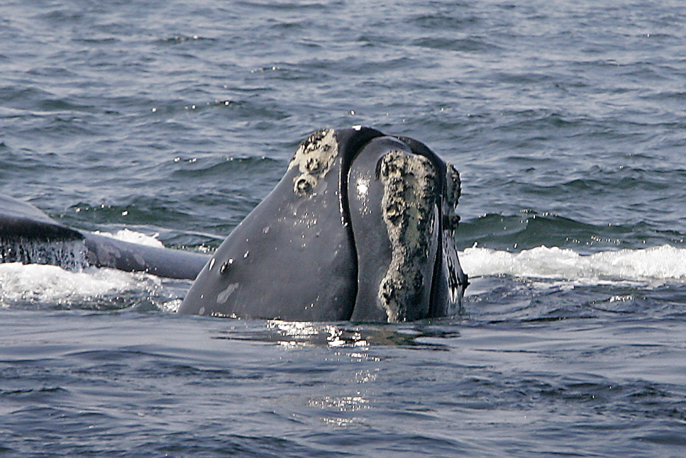 US, Canada to collaborate on whale investigation
