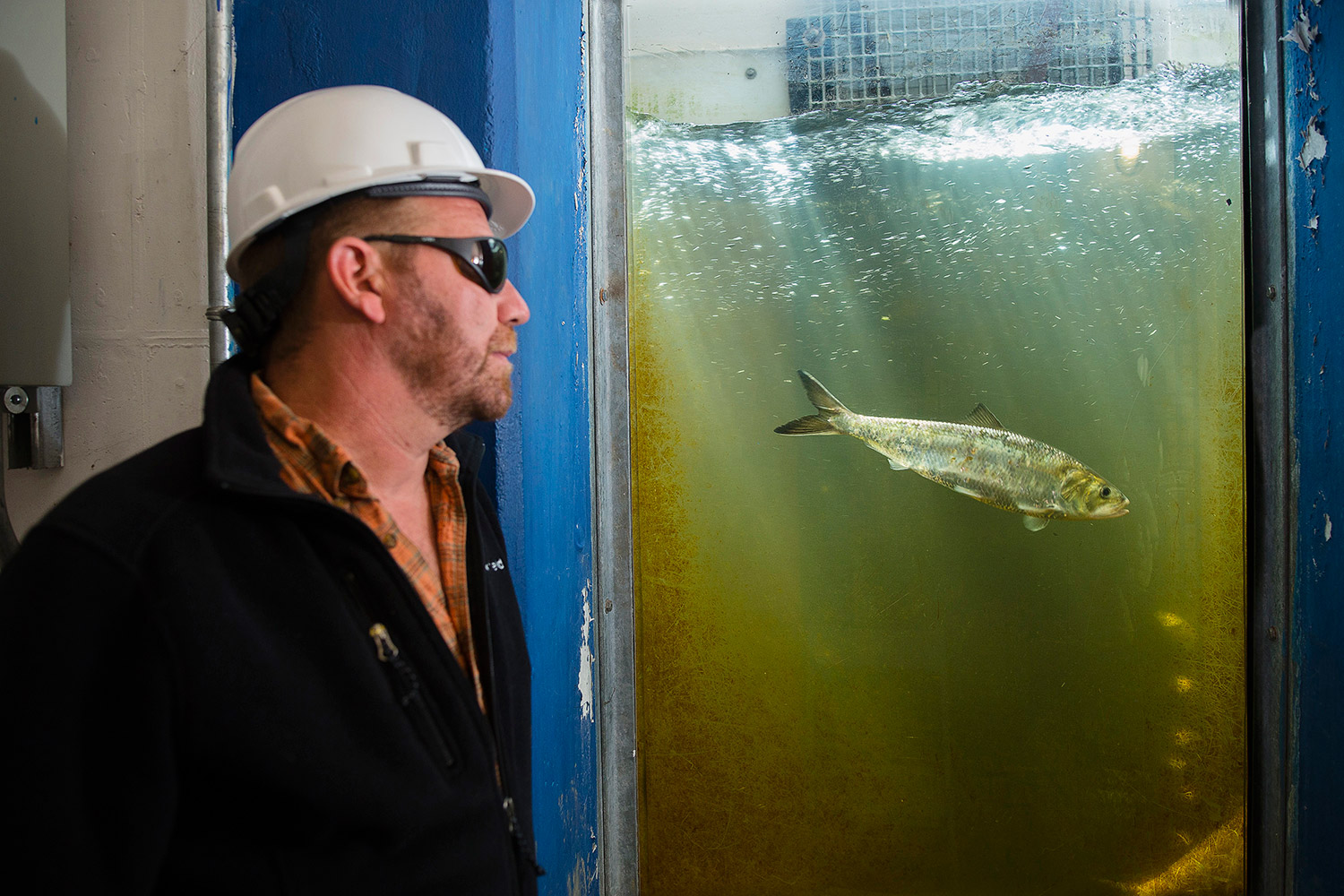 Freshwater aquarium fish crossword - On The Job Fish Biologist Matt Leblanc Helps Manage A Resource Portland Press Herald