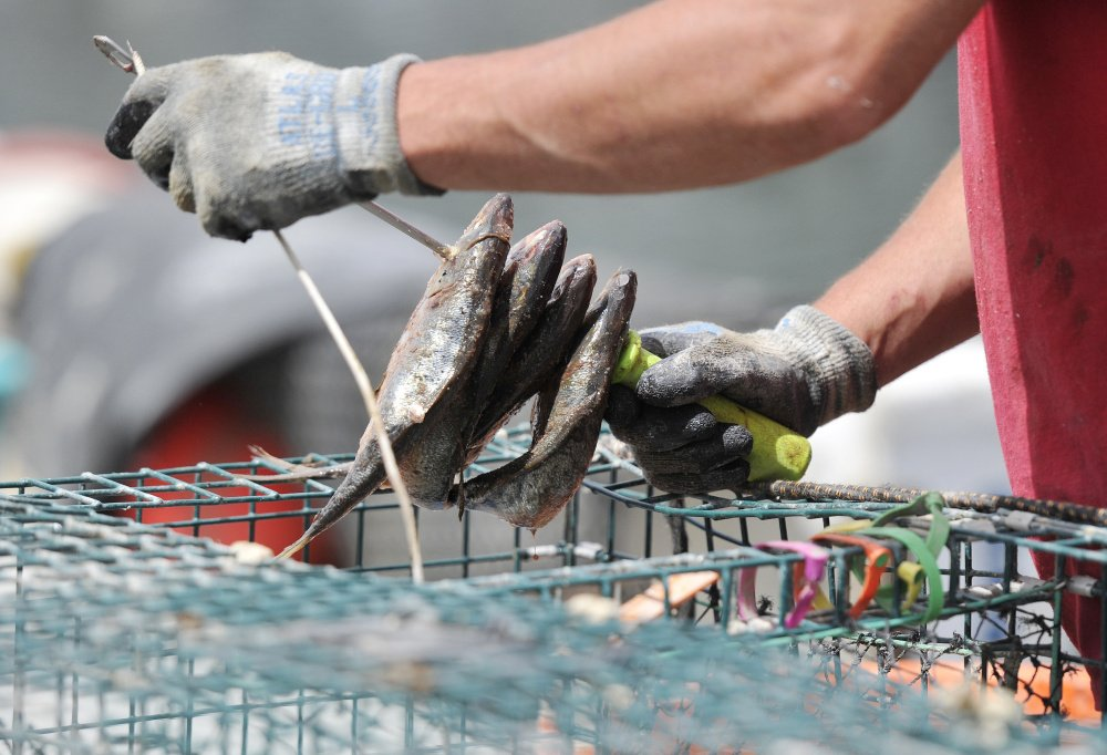 Visitors can see how lobster traps are baited and much more during the free event, which runs from 11 a.m. to 3 p.m. Saturday.