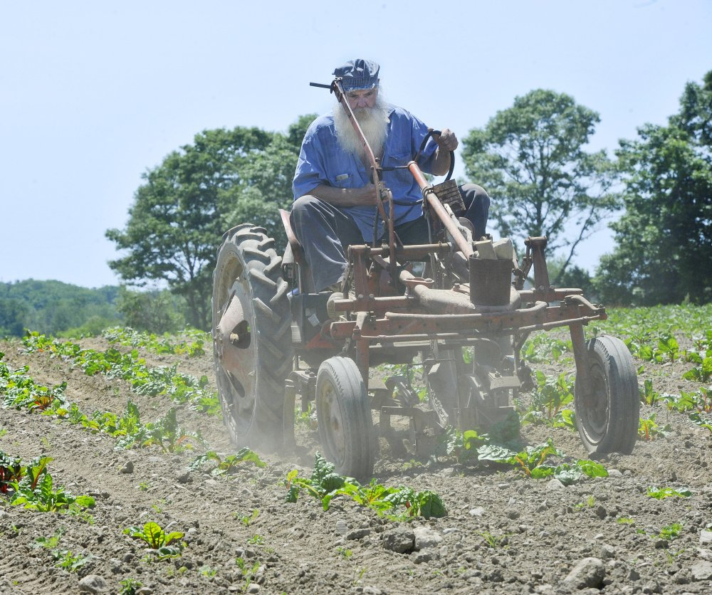 Mike Holmes runs an old cultivator through the furrows of a dry and dusty beet field at the Jordan Farm in Cape Elizabeth on Saturday afternoon.