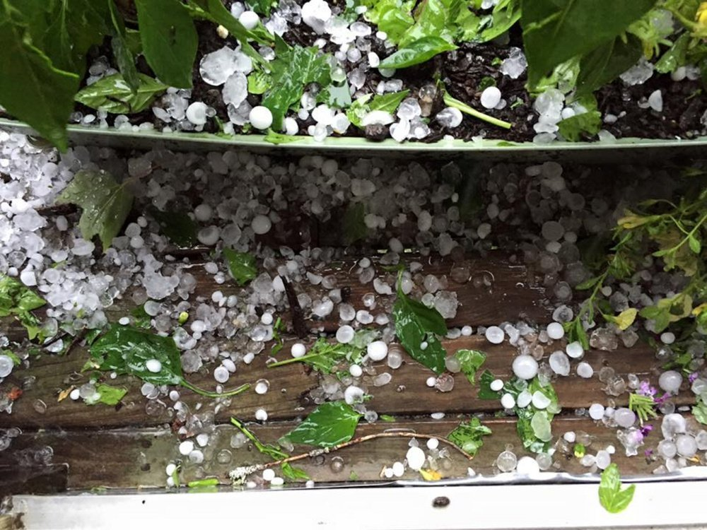 A photo provided to WCSH TV shows hail that fell in Kingfield following a severe thunderstorm passing through the region Monday afternoon.