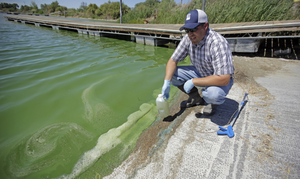 Jason Garrett, water quality bureau director at the Utah County Health Department, examines the bright, anti-freeze-green water in Utah Lake on Wednesday, near American Fork, Utah. The lake is one of the largest freshwater lakes west of the Mississippi River.