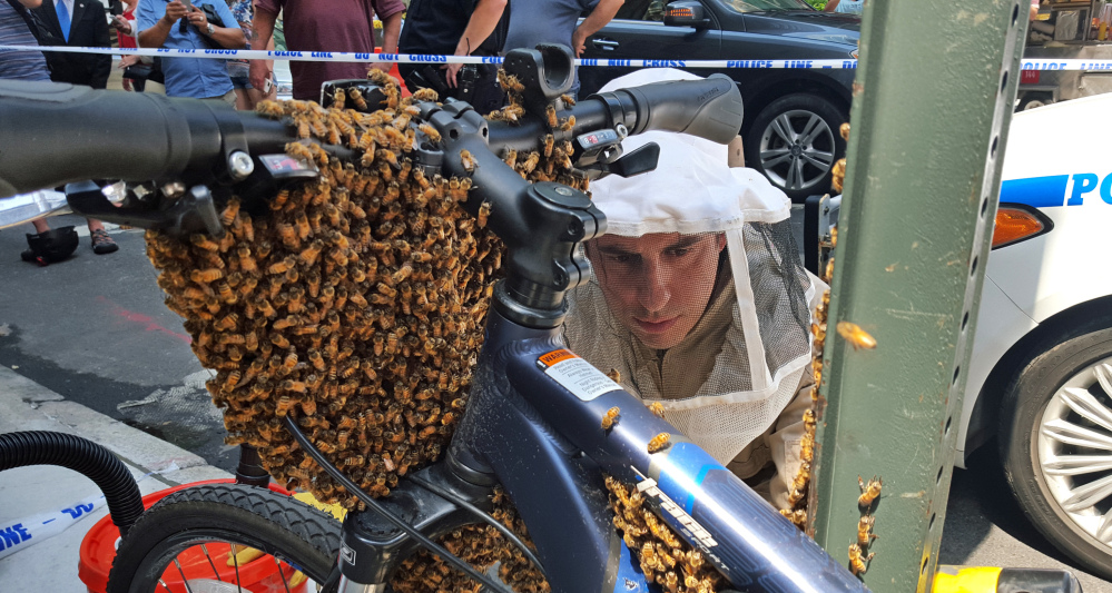 Detective Daniel Higgins begins removing bees from a bicycle parked in New York's Midtown Manhattan neighborhood. His team responds to emergency calls reporting swarms of bees that suddenly cluster in spots around the city