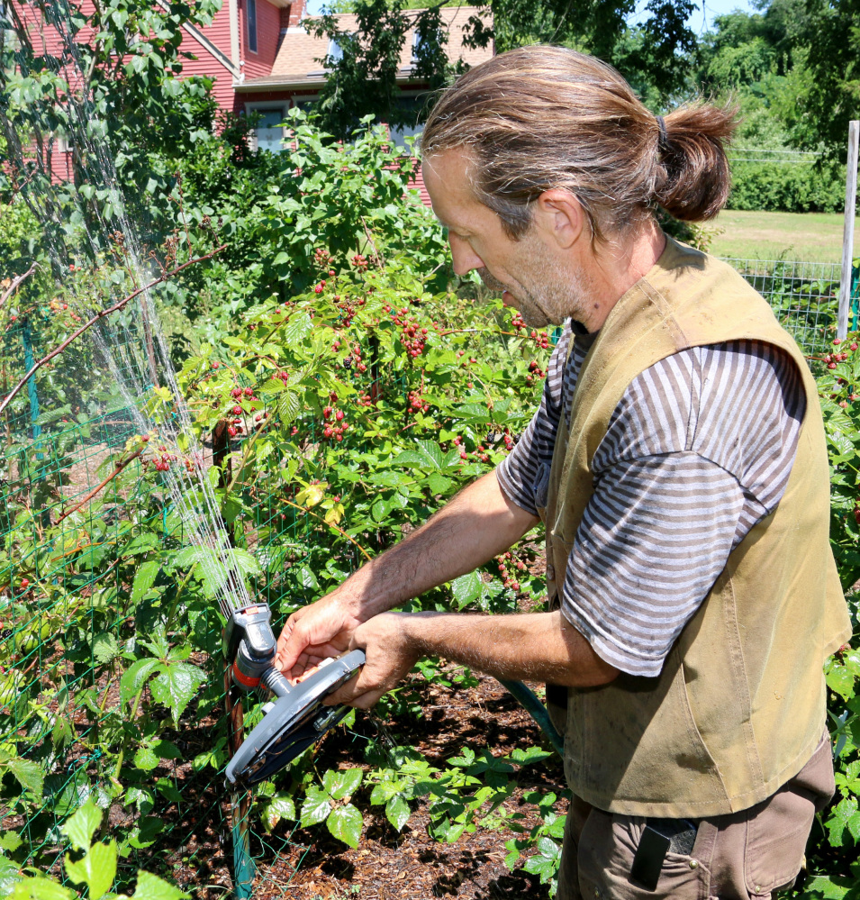 Colin Millar waters blueberries at the Agraria Farm in Rehoboth, Mass. The farm, about 20 acres, completely lost its usual crop of zucchini, summer squash and cucumbers.