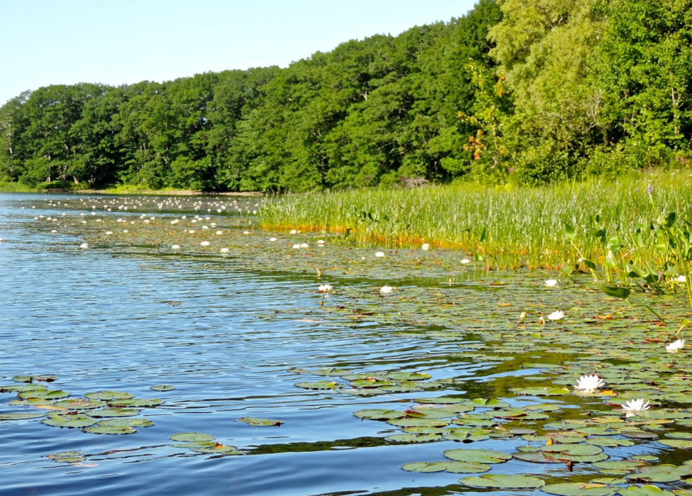 Fragrant water lilies adorn the shoreline of North Pond in Warren, a 338-acre venue that offered the perfect start to a late-summer week with a three-hour canoe expedition.