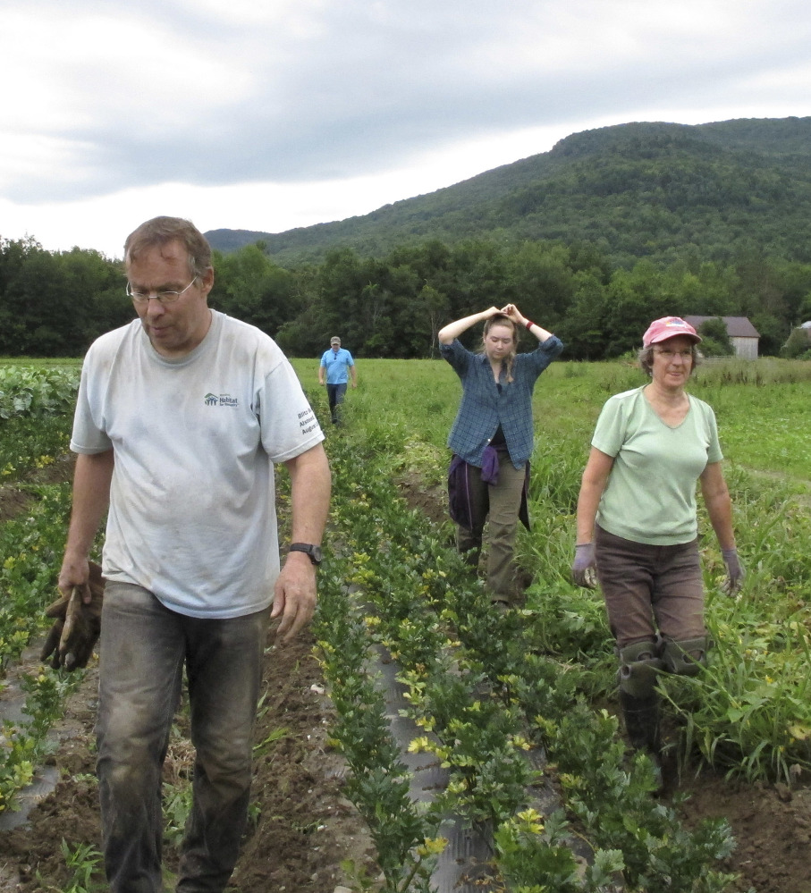 A team of volunteers called a crop mob move to another row after weeding root vegetables at Maple Wind Farm, in Bolton, Vt.