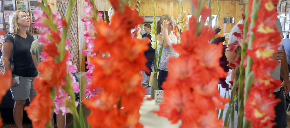 People take in the annual Gladiolus Show on the first day of the Windsor Fair. The fair had more than 100,000 attendees last year and runs this year through Labor Day.