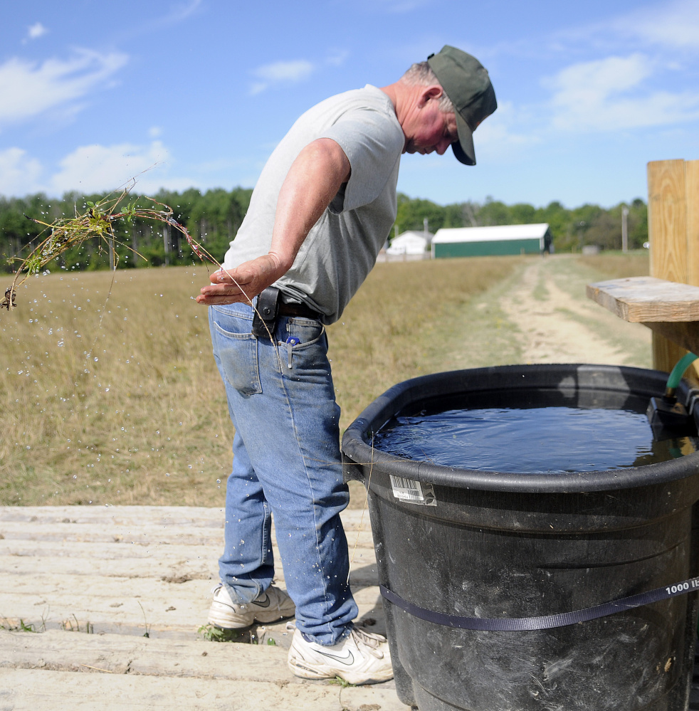 Pete Kelley removes grass from a water tub Tuesday at Kelley Bros. Farm in Pittston. When the spring that his cattle drank from went dry, he ran a hose 2,100 feet from his well to the tub.