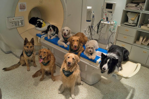 Some of the dogs involved in a study to determine how dog brains process speech sit around a scanner in Budapest, Hungary. Borbala Ferenczy/MR Research Center via AP