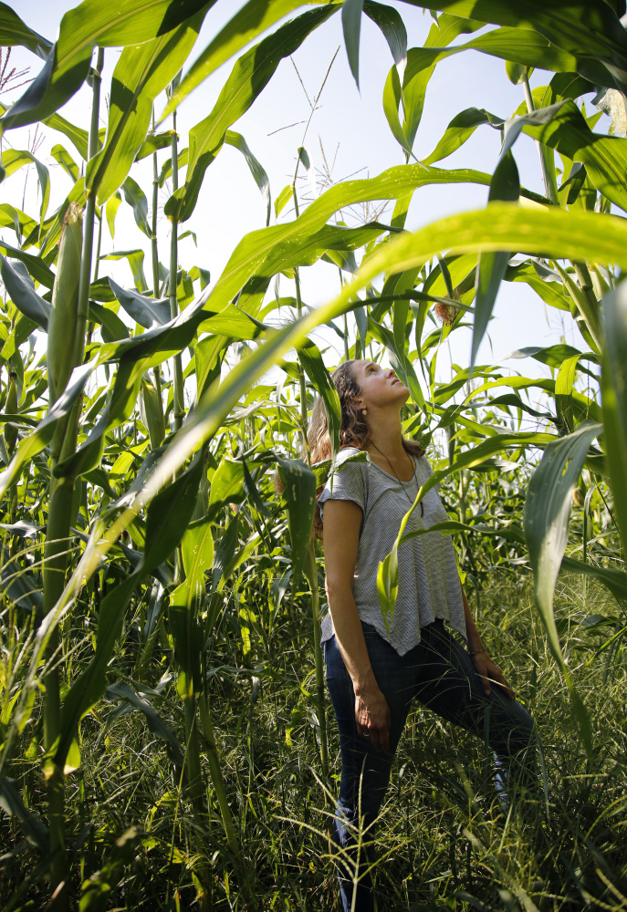 Caitlin Shetterly contemplates corn in a Freeport cornfield. Derek Davis/staff Photographer