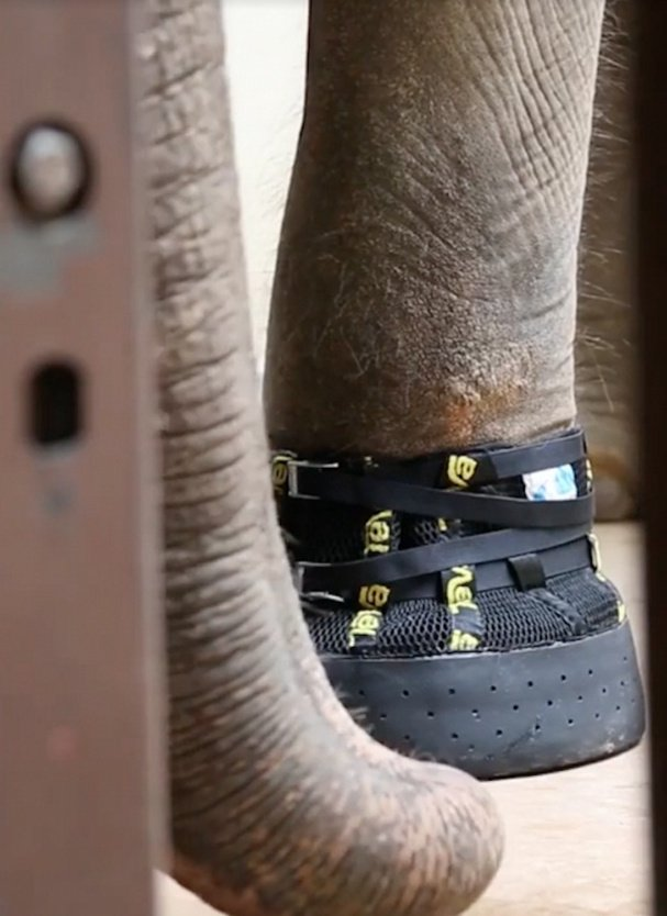 Custom boots protect feet that carry 9,000 pounds of elephant around.