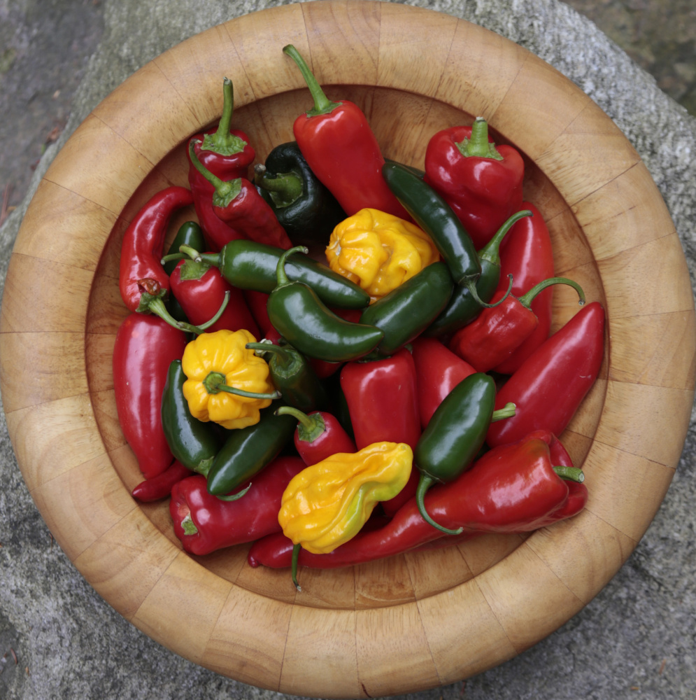 Peppers love heat so this summer's steamy temperatures have led to an abundance of the veggies in all colors and varieties.