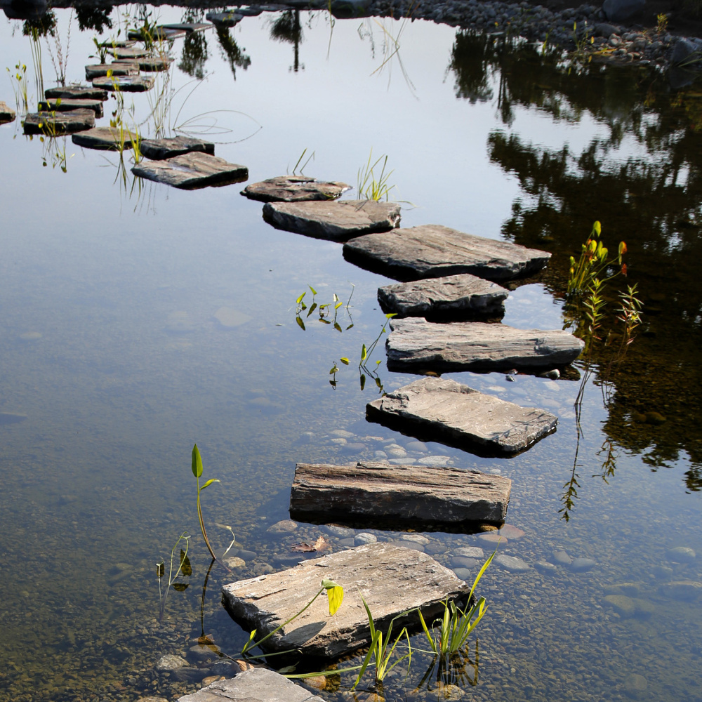 Stepping stones reach across a small, shallow pond in the garden.