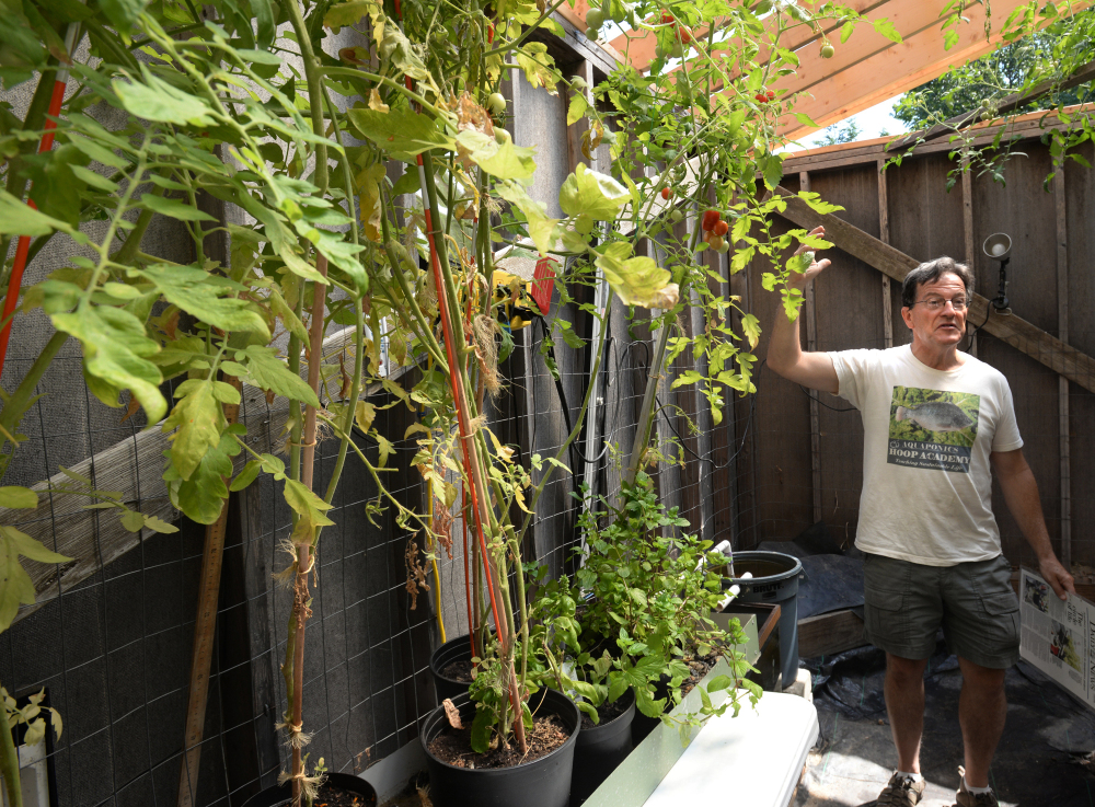 Amesbury, Mass., resident Ed Tivnan explains his aquaponic system, which recycles water for his plants grown in pots, greatly reducing the need for constant watering. Tivnan has grown strawberries, eggplant, onions and more to stock a local school with produce.