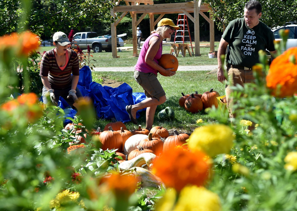Bernadette Heyes of Johnny's Selected Seeds, center, carries a pumpkin to the company lot Wednesday to prepare for the Common Ground Country Fair in Unity.