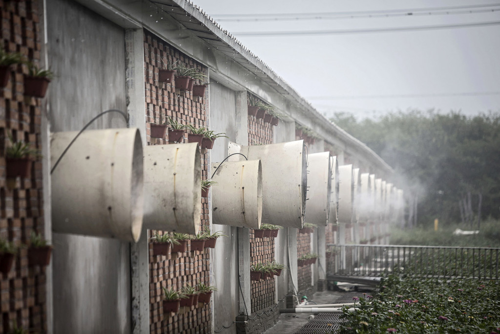 A mist containing disinfectant and deodorizing solution sprays outward as fans ventilate a building housing pig pens at the Jia Hua antibiotic-free pig farm in Tongxiang, China. Qilai Shen/Bloomberg