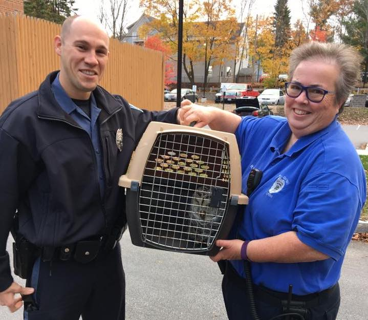 Brunswick police Officer Justin Dolci and Heidi Nelson, the town's animal control officer, placed the owl in a pet carrier and arranged to have it taken by the Maine Warden Service to Avian Haven, a wild bird rehabilitation center in Freedom.