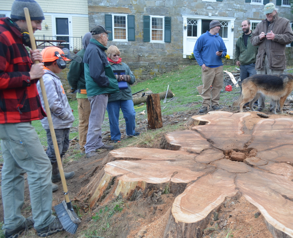 Friends of an elm tree that stood for 250-300 years in Charlotte, Vt., stand around the stump after the elm was cut down on Tuesday. The tree died of Dutch elm disease.