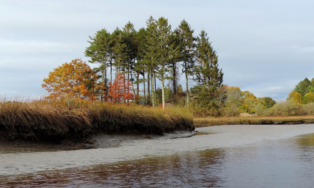 A small pine grove grows near the mouth of the Mousam River adjacent to Parsons Beach.