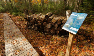 The trails created and maintained by the Kennebunkport Conservation Trust are well marked.