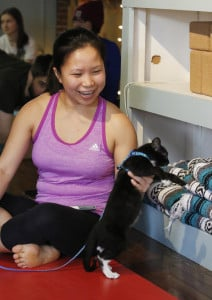 SACO, ME Ð DECEMBER 1: Tien Quang plays with a kitten before the start of a yoga class Saturday, Dec. 3, 2016 in Saco, Maine. The yoga studio had kittens at the session as part of a pet adoption effort. (Photo by Joel Page/Staff Photographer)