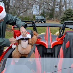 Bryant LaPlante places a Santa Claus hat on his stuffed orangutan, named Harry, on Saturday at The Forest, his Christmas tree farm in Cornville.