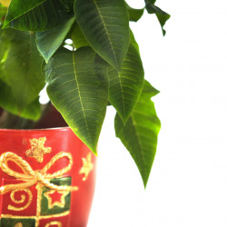What to get the gardener in your life this holiday? One idea is plants – but there are others.