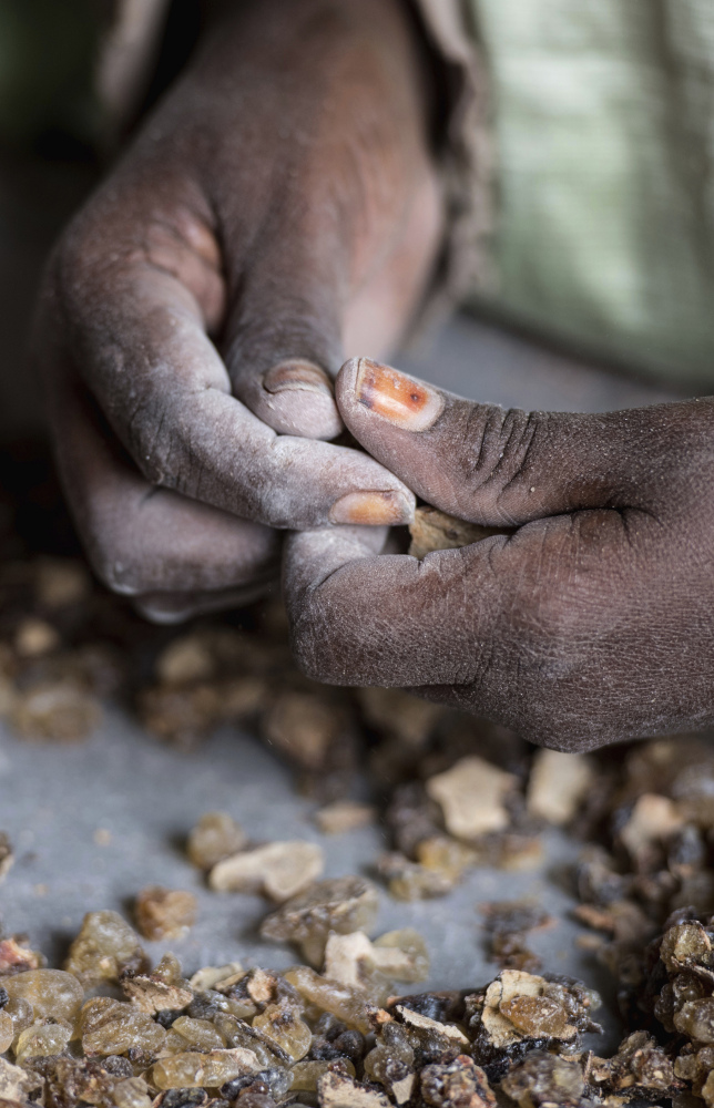 A woman sorts raw frankincense gum in Burao. Prices for raw frankincense have gone from $1 a kilogram to $5-$7.