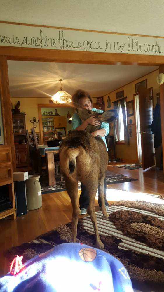Kim Mcgaughey is shown with Faline, her mule deer. The deer was killed by wildlife officials in Kansas. MUST CREDIT: Courtesy of Taryn Mcgaughey