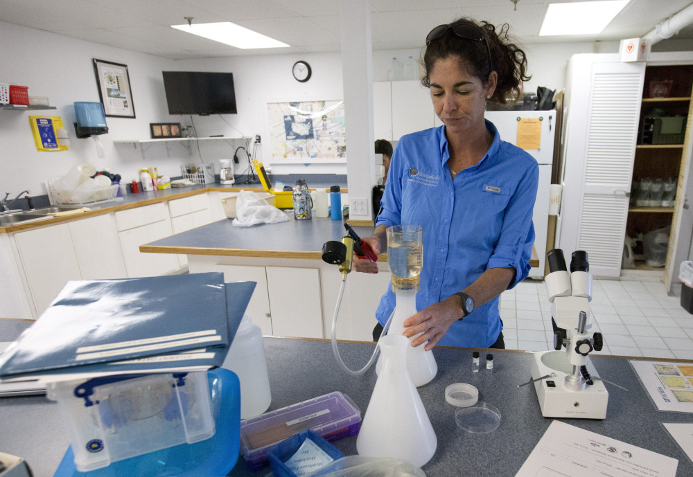 Sarah Egner, director of curriculum development at Marinelab in Key Largo, Fla., checks for microscopic plastics in seawater. Gulf Coast researchers are launching a two-year study to see whether the microfibers shed by fleece clothing affect marine life.
