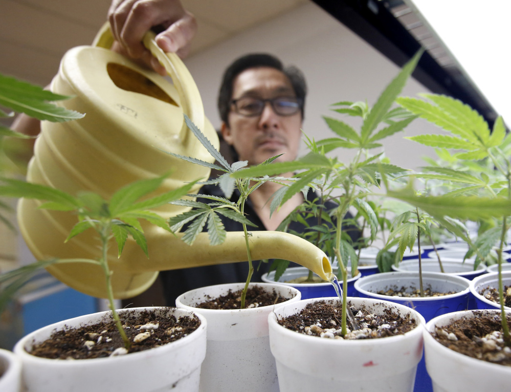 Market researchers say the Trump administration's non-embrace of legalized marijuana won't curb its double-digit sales growth of the last few years.