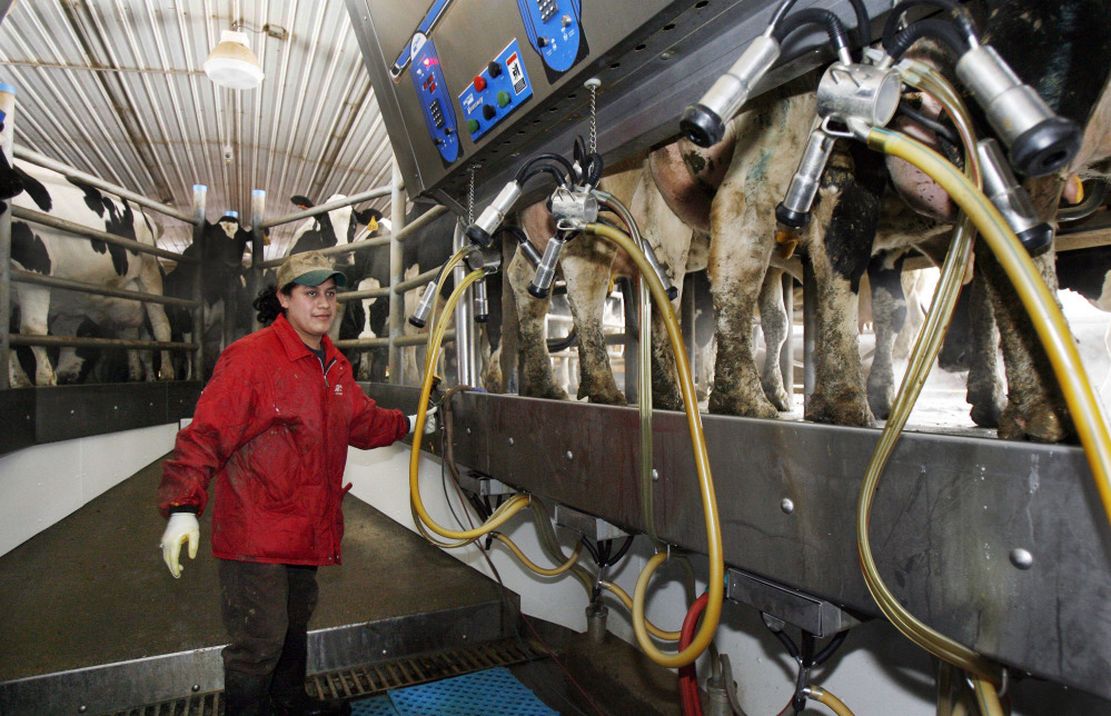 A Hispanic man works at a dairy farm in Fairfield, Vt. A dairy economist says that anything that reduces the ability to trade products to Mexico will be troubling for U.S.  dairy farmers because Mexico is their biggest export market.