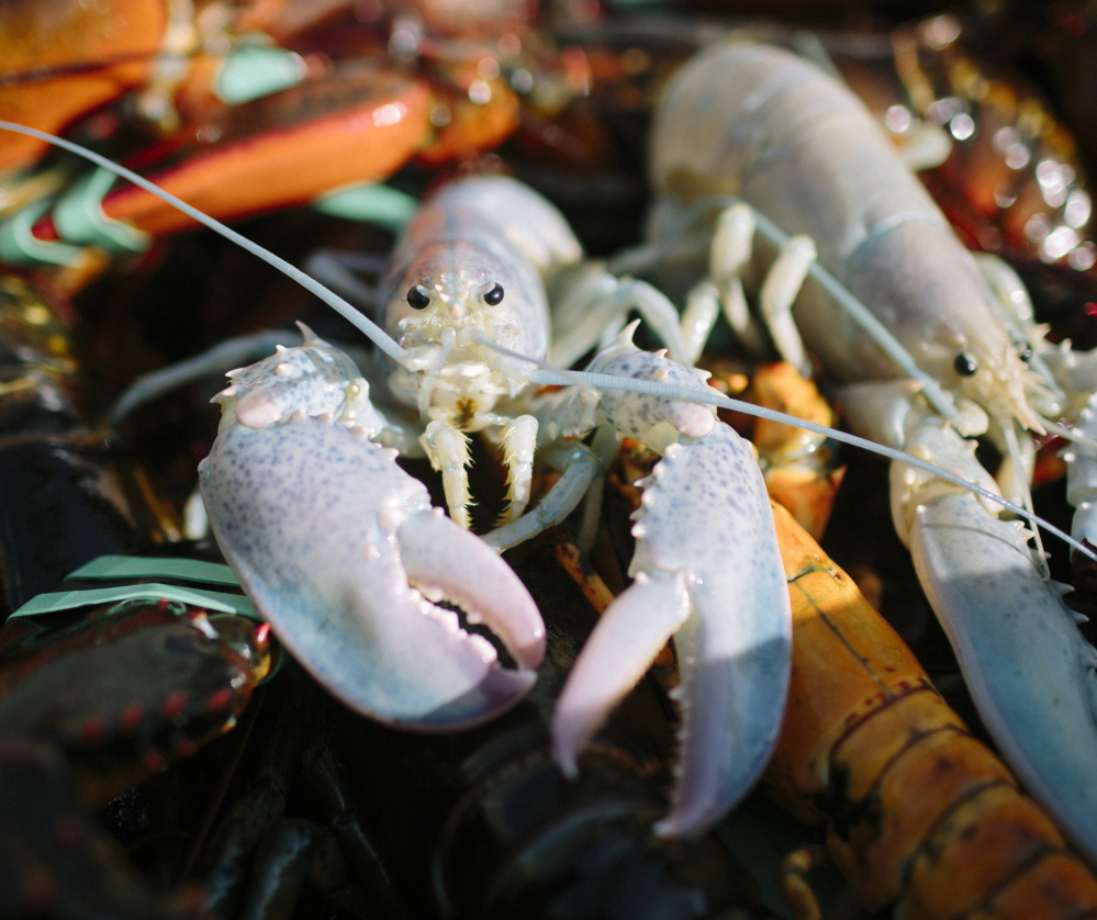 A deal for Canadians to sell seafood without tariffs to the European Union cleared its final hurdle in the Parliament of Canada on Tuesday. The deal gets rid of tariffs on Canadian lobster exports to the 28-nation bloc, putting Canada at a huge advantage over the U.S. The tariffs for fish and seafood average 11 percent, and the EU is the biggest importer of seafood in the world.