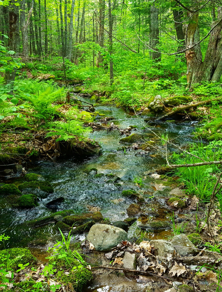 The initiative started in 2002, with the goal of connecting the Damariscotta and Sheepscot rivers. That connection has not yet been made, but there are still plenty of trails to enjoy a nature ramble.
