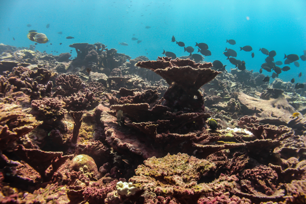 Warming waters and disease are killing coral.