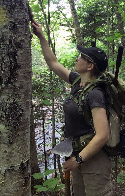 Sally Gorrill, a captain in the U.S. Army, removes unauthorized markings from a tree June 15 along a trail in the White Mountain National Forest in New Hampshire.
