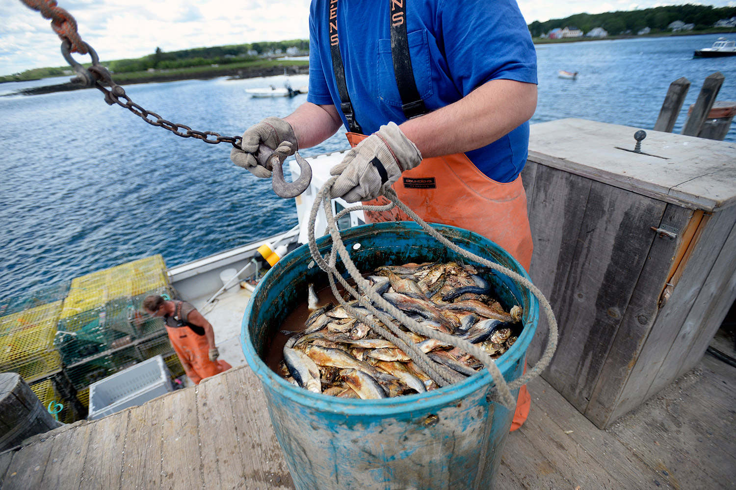 This year a welcome switch on bait supply for maine for Commercial fishing boots