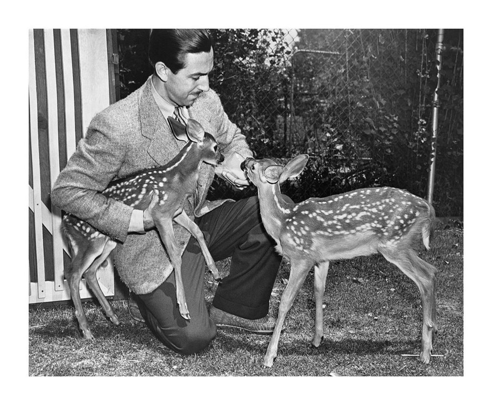 Walt Disney with Bambi and Filene, orphan fawns from Maine that were models for the animated feature