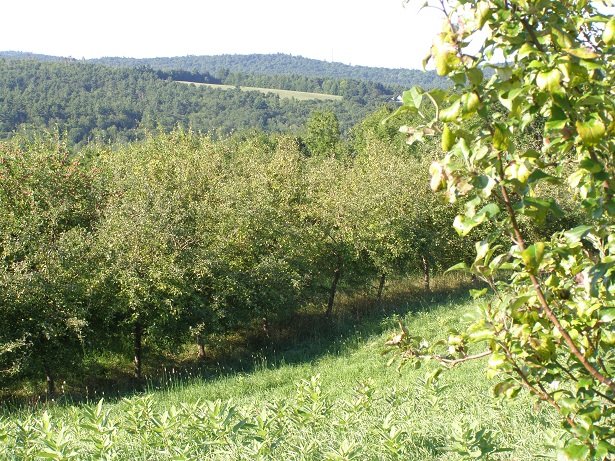 The apple orchards that will be protected have produced apples for the wholesale market for 80 years.