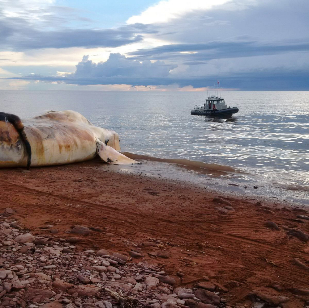 Unusual spike in whale deaths in Canada, US sparks probe
