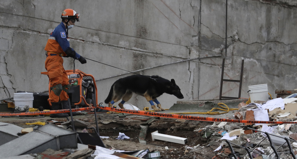 A handler and his rescue dog look for victims at the site of a collapsed seven-story building in Mexico City's Roma Norte neighborhood Friday. Mexican officials promised to keep up the search for survivors as rescue operations stretched into a fourth day.