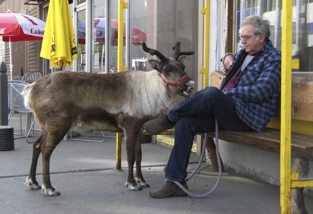 Star and her owner, Albert Whitehead, take a break during a stroll last spring through downtown Anchorage, Alaska. She was a popular attraction for locals and tourists.