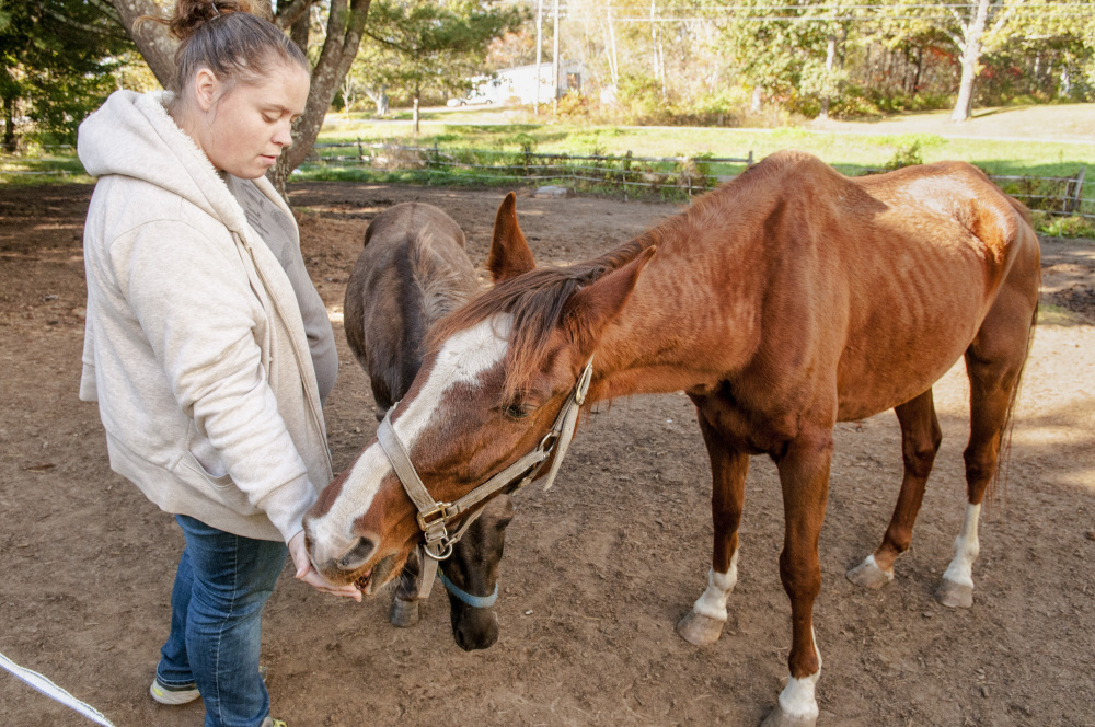 Kelsey Radley feeds an apple to her horse Zin on Friday in Pittston while Pocket the mule, center, waits for another apple. Passers-by have speculated on Facebook that the horse is malnourished, but one of its owners says she is working with a veterinarian to find out why the horse has lost so much weight.