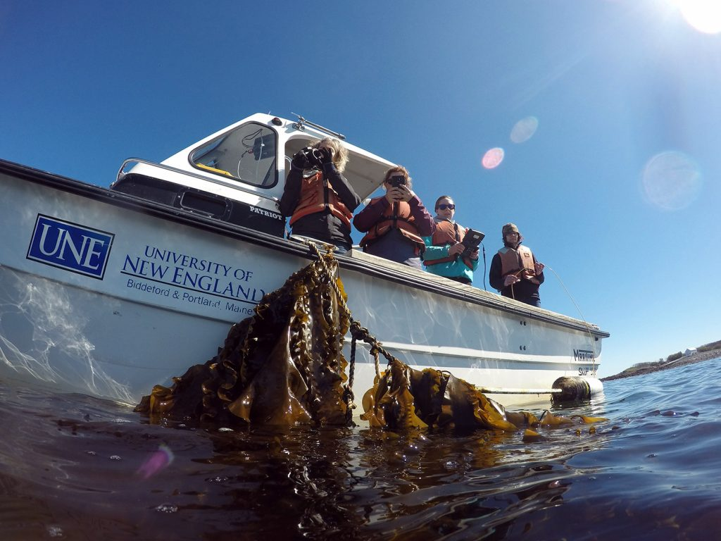 University of new England photographer Holly Haywood, left, and Associate Professor Jeri Fox, far right, work with students at the school's kelp farm.