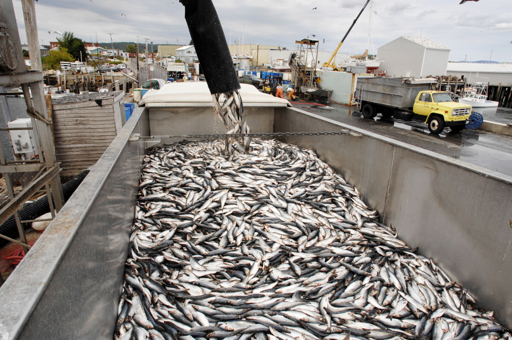 U.S. boats caught fewer fish in 2016, but the haul was worth 2.1 percent more