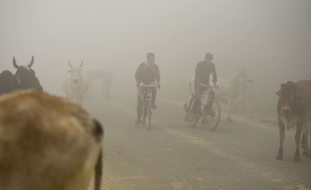 Bicyclists pass cows enveloped in the morning smog on the outskirts of New Delhi, India. Many residents chafe at the lack of meaningful action by authorities to tackle smog.