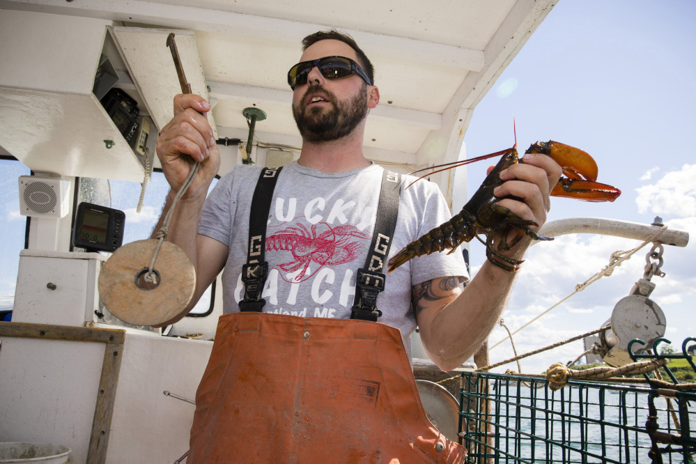During a promotional tour sponsored by the Maine Lobster Marketing Collaborative last summer, Capt. Dave Laliberte demonstrates how to measure lobsters to make certain they're legal catches. The collaborative has focused on boosting domestic demand for new-shell lobsters, but fishermen say that hasn't helped to raise their boat prices.