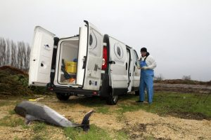 France_Dead_Dolphins_22227