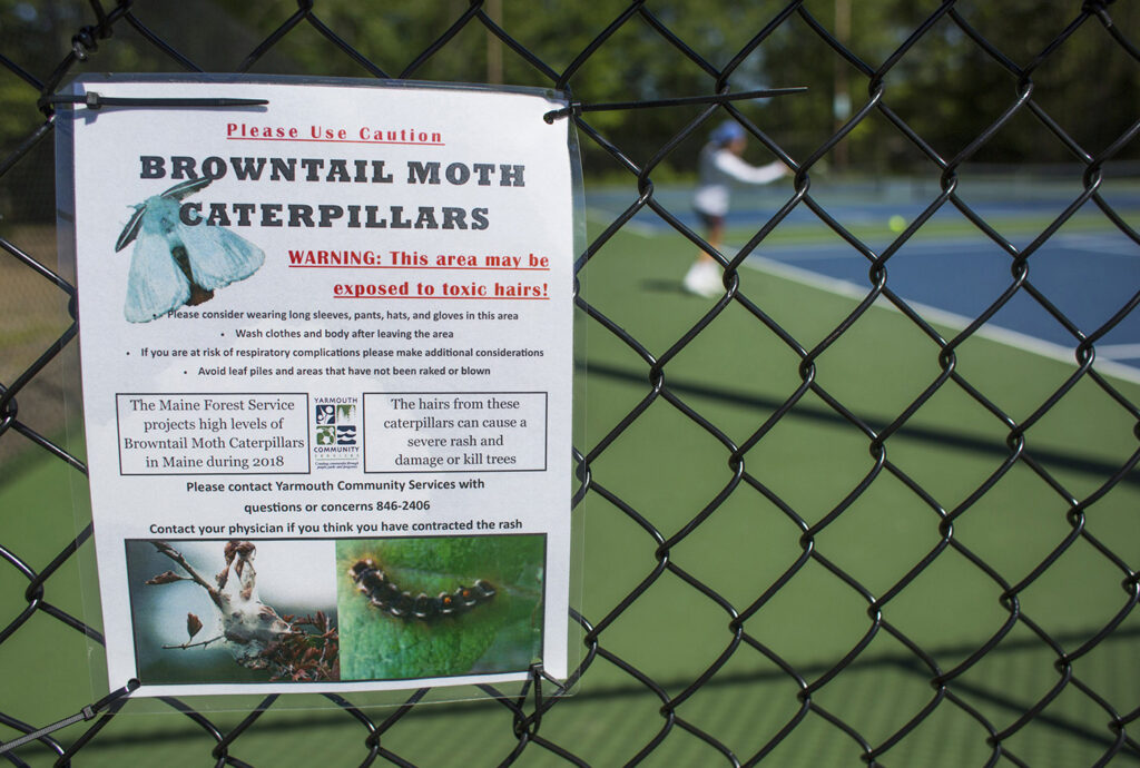 Signs posted at the tennis courts at Yarmouth High School warn people of browntail moths in June 2018.