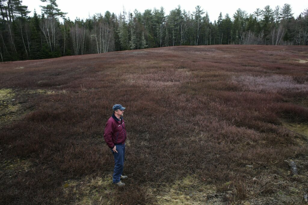 Courtney Hammond looks out over his family's blueberry fields in Washington County on Wednesday, April 25. After losing money on the crop last year, they plan only to pick about 7 percent of their harvest this year, and are looking to try alternative practices such as pick-your-own.